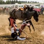 the horse won